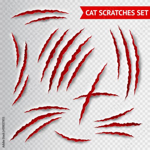 Buy Cat Claw Australia