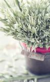 Rustic Christmas bouquet - 119846735
