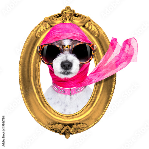 Poster diva chic dog