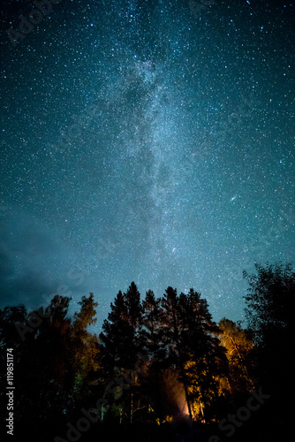 Milky way in the forest among trees
