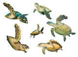 Turtle. Sea Turtles isolated. Hawksbill and Green Turtles on white background
