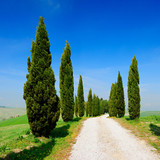 Avenue of Cypress Trees, Tuscany, Italy