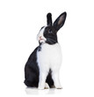Funny rabbit isolated on white