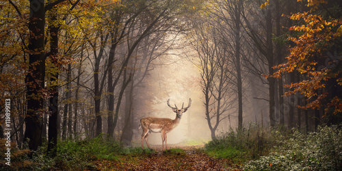 Foto op Plexiglas Bestsellers Damhirsch auf einem Weg im verträumt nebeligen Wald