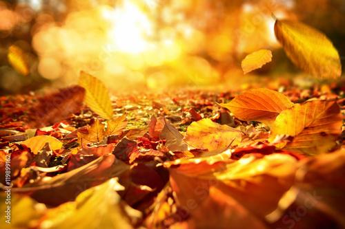 Poster Stimmungsvolle Szene im Herbst mit fallenden Blättern und warmer Sonne