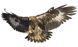 Fototapety Golden eagle landing hand draw vector background illustration.