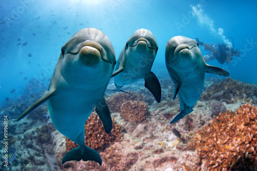 three dolphins close up portrait underwater while looking at you - 119968154