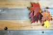 Quadro Autumn Sugar Maple Leaves Framing Rustic Wood Background