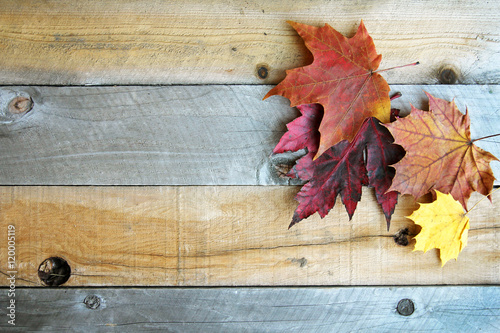 Autumn Sugar Maple Leaves Framing Rustic Wood Background - 120005119