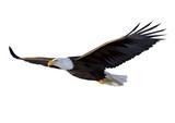 Eagle flies