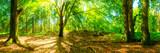 Lichtung im Wald mit großen Bäumen bei strahlendem Sonnenschei