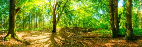 Fotobehang Lime groen Lichtung im Wald mit großen Bäumen bei strahlendem Sonnenschei
