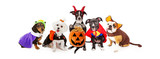 Five Dogs Wearing Halloween Costumes Banner