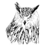 Sketch of owl on a white background