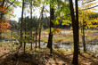 Walden Pond forest