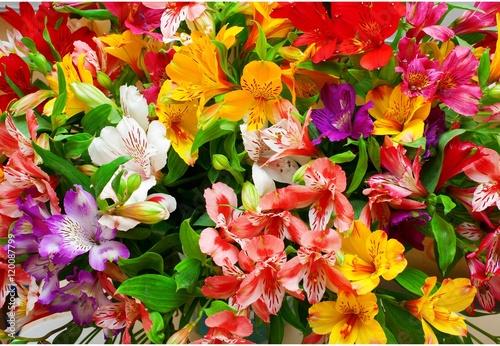 Plakat Lilium orientale Almeria. bouquet of colorful flowers. close up.