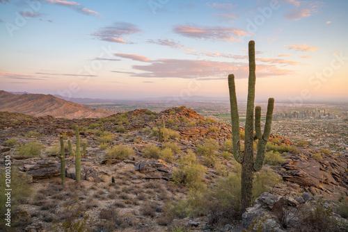 Poster Oceanië View of Phoenix with Saguaro cactus