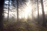 Beautiful landscape of a foggy forest, at sunrise