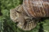 Macro fotografia di una lumaca nella sua chiocciola