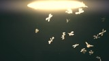 Close-up of an old street lamp with mosquitoes and moths at night. Slow motion