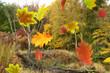 Herbst 157