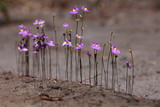 Fototapety Kleine Orchideen Blüte in Violett
