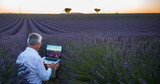 Fototapety Man at work in a Lavender field