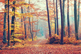 Beautiful dreamy forest at autumn