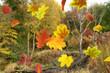 Herbst 158