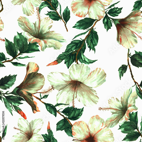 Materiał do szycia Hand-drawn watercolor floral seamless pattern with the tender white hibiscus flowers on the white background in vintage style. Natural tropical and vibrant repeated print for textile, wallpaper etc