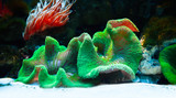 Podwodny tropikalny świat w niezwykłych kolorach © Marek AGInt