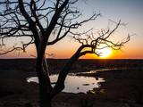 Rhino in the Etosha National Park at sunset, Namibia