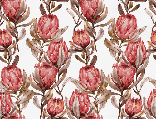 Hand-drawn watercolor seamless tropical pattern with red protea flowers in retro style. Vintage exotic summer print with floral elements for the textile and wallpapers. - 120181992