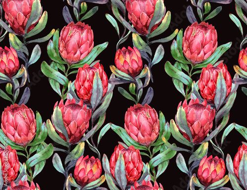 Hand-drawn watercolor seamless tropical pattern with red protea flowers on the black dark background. Colorful exotic summer print with floral elements for the textile and wallpapers. - 120182137
