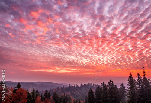 Aluminium Hell dark red sky landscape with black forest
