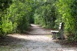 Trail in the woods of the Pine Barrens