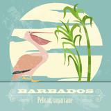 Barbados national symbols. Pelican, sugarcane. Retro styled imag