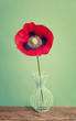 A red vintage poppy in a vase on a trendy background