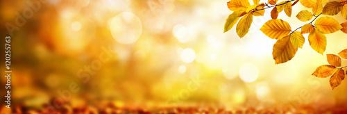 Gelbe Blätter im Herbst verzieren einen breiten unscharfen Hintergrund aus Glanzlichtern im Wald