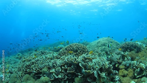 Poster Water planten Underwater coral reef and tropical fish in sea ocean.