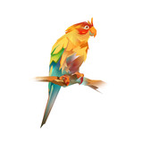 bright parrot on a white background