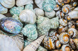background of colorful sea shells