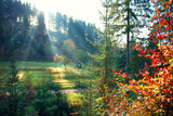 Autumn nature scene. Beautiful morning misty old forest and meadow