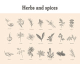 Set Herbs and spices. Sketch vector vintage - 120393129