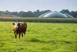 Biogas - 120402783