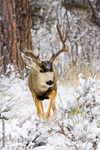 Snowstorm Deer Poster