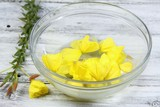 Making Bach flower remedy, Oenothera biennis, evening star, natural method