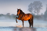 Horse standing in rivet with fog at sunrise