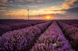 Lavender field / Stunning landscape with lavender field and wind farm at sunrise near Shabla, Bulgaria