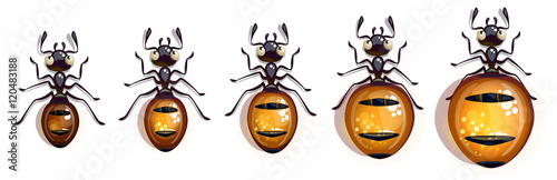 Cartoon vector ant animation. Vector character for app user interface.